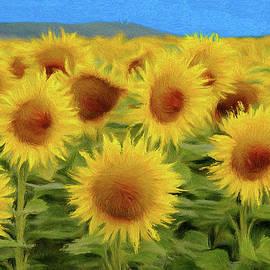 Jeff Kolker - Sunflowers in the Field