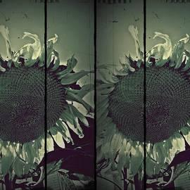 Patricia Strand - Sunflowers