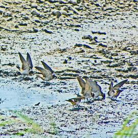 Lenore Senior and Dawn Senior-Trask - Swallows at the River