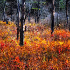 Thomas Schoeller - Swamp Music - A Late Autumn Impressionist scenic
