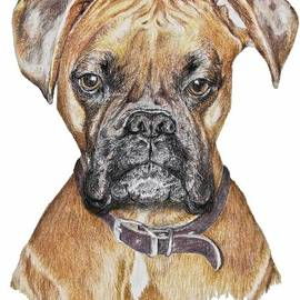 Marla Saville - Sweet Boxer