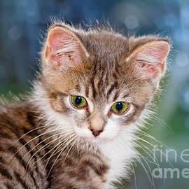 Teresa Zieba - Sweet Kitten
