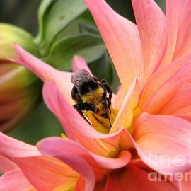 Rory Sagner - Sweet Nectar