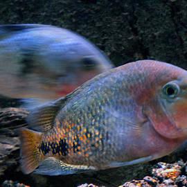 Colette V Hera  Guggenheim  - Swim with 3 Fish in Denmark