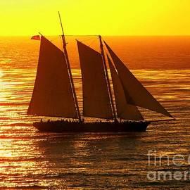 Karen Wiles - Tangerine Sails