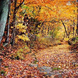 Cheryl Davis - Tennessee Autumn
