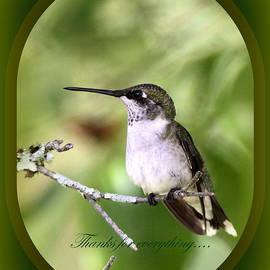 Travis Truelove - Thank You Card - Wildlife - Bird