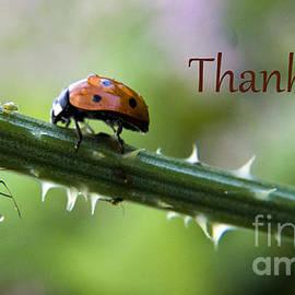 Darleen Stry - Thank you Ladybug