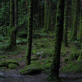 Annemeet Van der Leij - The Dark Wood