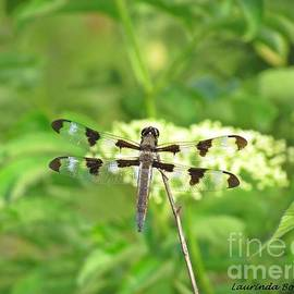 Laurinda Bowling - The Dragon Fly 1