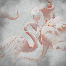 Sharon Coty - The Flamingo Dance