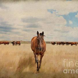 Prairie Poetry - The Friendly One