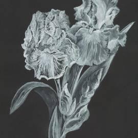 Carol Wisniewski - The Gossamer Iris