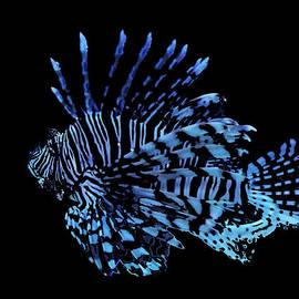 Robin Hewitt - The Lionfish 3