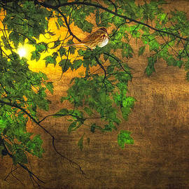 Tom York Images - THE LITTLE SPARROW IN THE TREE