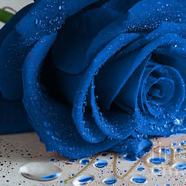 Tracy  Hall - The Magical Blue Rose