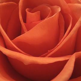 Chad and Stacey Hall - The Many Layers of a Beautiful Rose