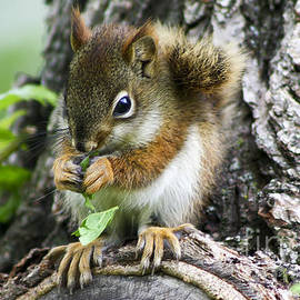 Teresa Zieba - The Most Adorable Baby Squirrel