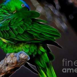 Donna Greene - The Parrot Fractal