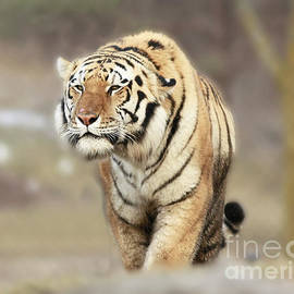 Inspired Nature Photography Fine Art Photography - The Prowler