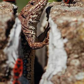 Stwayne Keubrick - the random Lizard