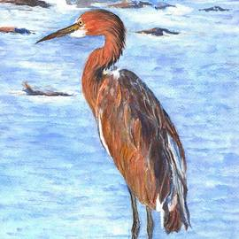 Carol Wisniewski - The Reddish Egret of Florida
