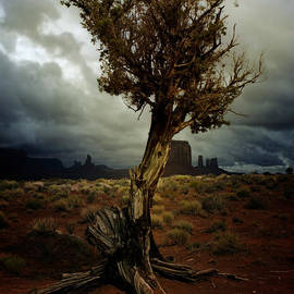 Ellen Heaverlo - The Tree