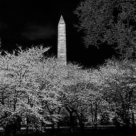 Lois Bryan - The Washington Monument at Night