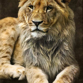 Angela Doelling AD DESIGN Photo and PhotoArt - The young lion