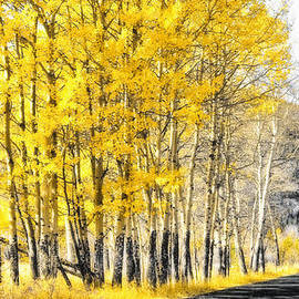 Aron Kearney Photography - Through the Aspens