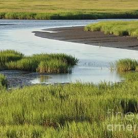 Al Powell Photography USA - Tidal Marsh