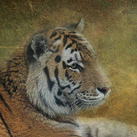 Claudia Moeckel - Tigerlily