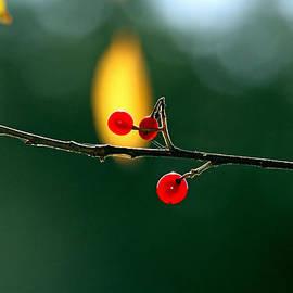 Marie Jamieson - Translucent Berries