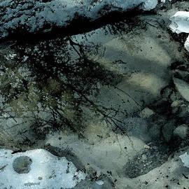 Colette V Hera  Guggenheim  - Transparent Tree in Water Plash