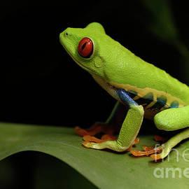 Bob Christopher - Tree Frog 14