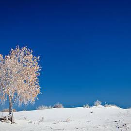 Ralf Kaiser - Tree In White Sands