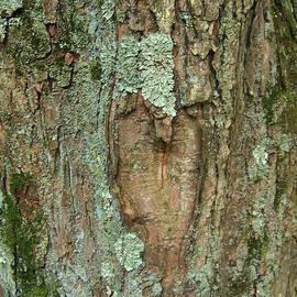 Natalie Long - Tree Love