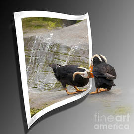 Betty Depee - Tufted Puffin