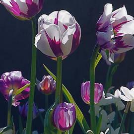 Byron Varvarigos - Tulip Springtime Memories