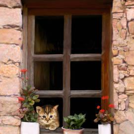 Bob Nolin - Tuscan Kitten in the Window