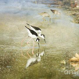 Susan Gary - Two Black-Necked Stilts in Pond