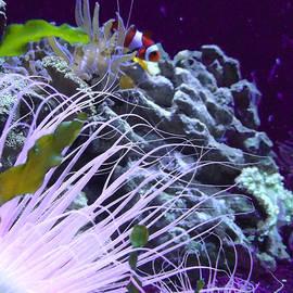 Robin Hewitt - Undersea World
