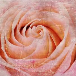 Elizabeth Budd - Urban Bloom