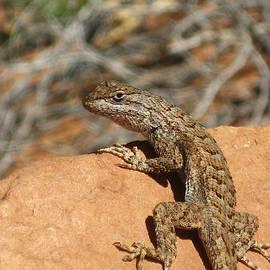 Matthew Parks - Utah Lizard