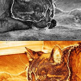 Vertorama Two Cats