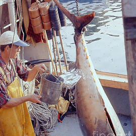 Very Large Tuna Gloucester MA