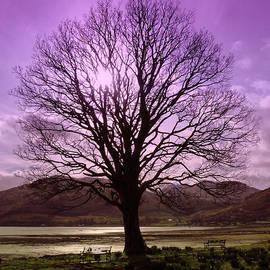 Lynn Bolt - Village Green Tree