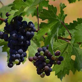 Xueling Zou - Vineyard 36