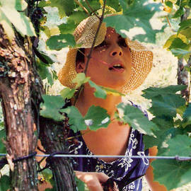 Padre Art - Vineyard Harvest