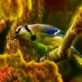 Bill Tiepelman - Visions of a Blue Jay